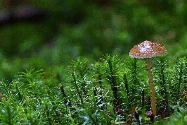 surprises découvertes champignon sérendipité