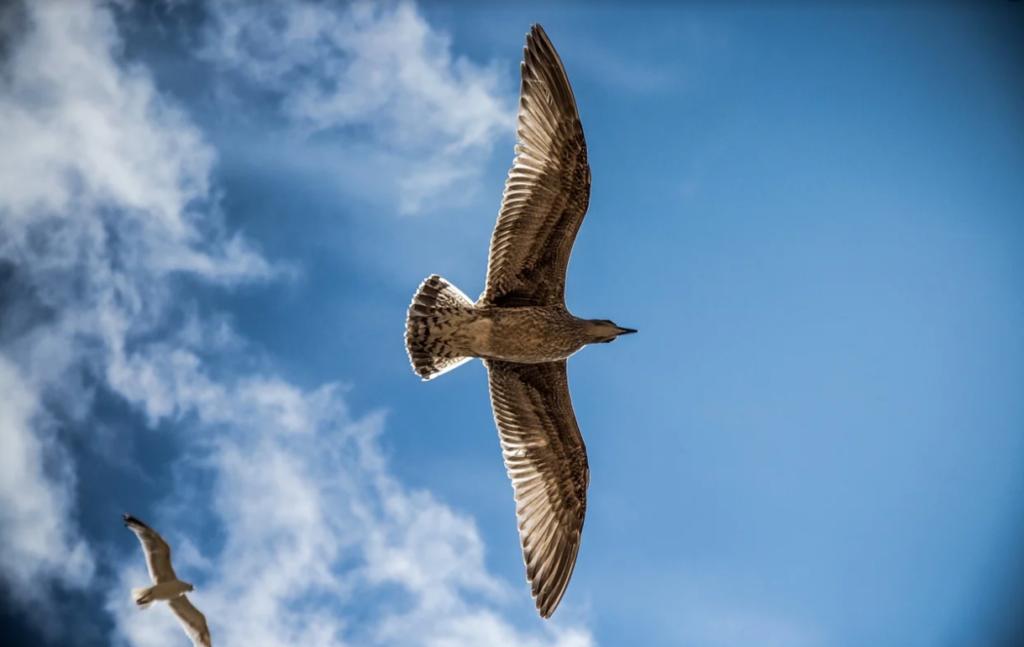 oiseau, légèreté, liberté